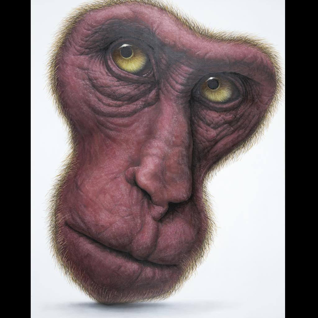顔力-日本猿-