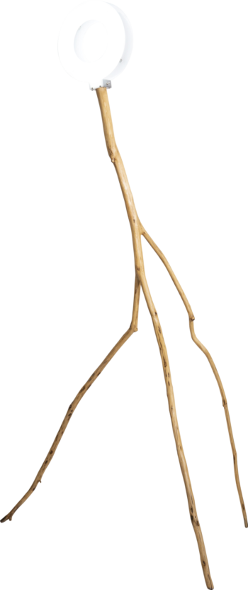 木の枝とサークルライト